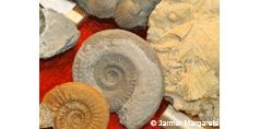 Mineralien und Fossiliensammlerbörse